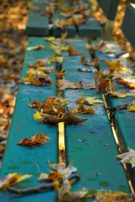 A leaf covered bench