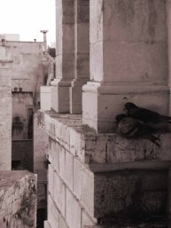 Pigeons sleeping outside our hotel window in Giovinazzo, Italy