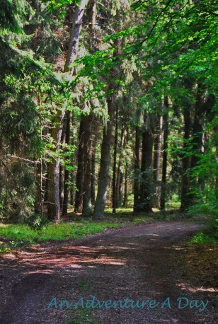 A summer walk in the woods is refreshing for the body and the spirit.