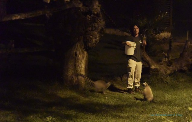 Feeding the Lemurs was an amusing beginning to our tour of Rome's Zoo