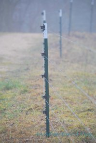 Fences along the trail