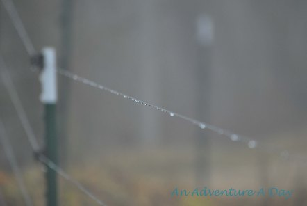 Rain collects on the electric fence
