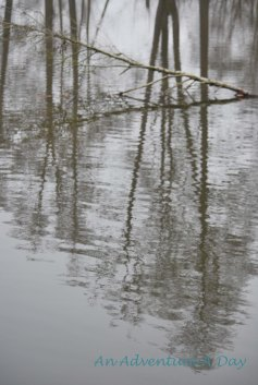 Bare trees reflected in the dark winter waters.