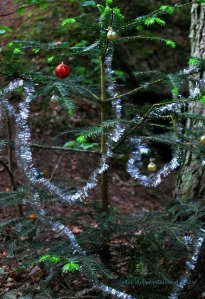 Little Christmas Tree in the Big Woods