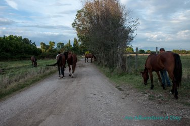 Horses near the Appia Antica