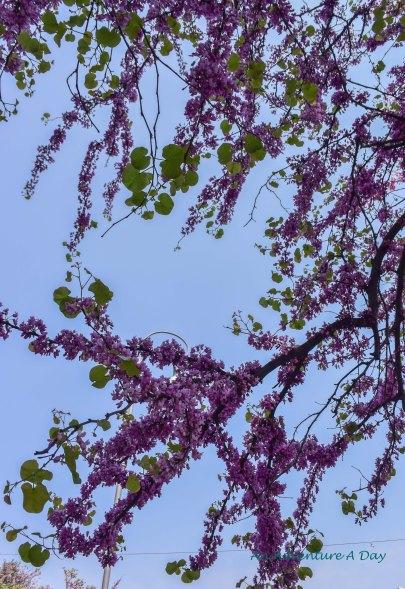 tree along the way